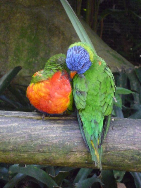 Jardin botanique de Deshaies - Le blog de Babeth/Zabeth/Mamézaboune