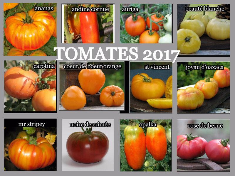 tomates 1 bis