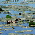 Balade au Lac 030818