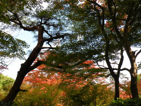 Japon_Kyoto_2009_2017