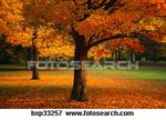 colorful_fall_trees__bxp33257