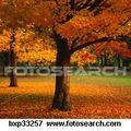 7 choses qui rythment mon automne