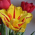Tes tulipes...