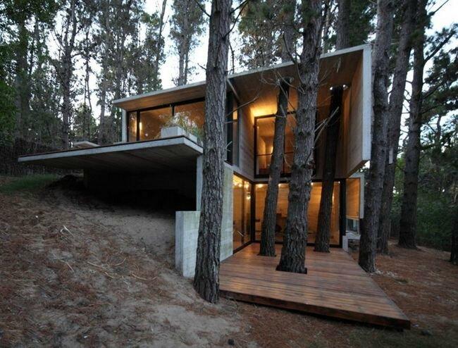 arbres percant le plancher yurtao