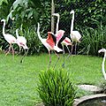 06 - Flamants roses