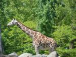 zoo + lincoln park (33)
