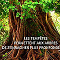 Citation 17...arbre