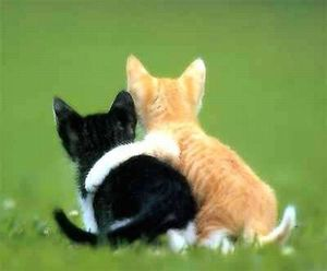 cats_love_19