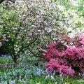 Le jardin savill.