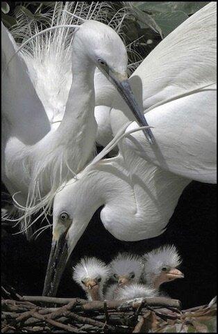 l instinct maternel 7