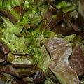 Salades feuilles de chêne