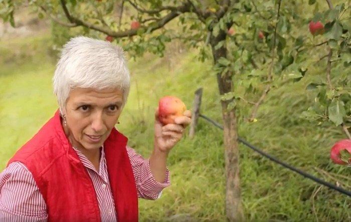 isabella-dalla-ragione-varietes-fruits-ombrie-italie-01