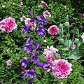 Roses campanules_13 12 06_4496