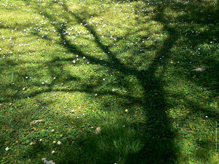 herbe_ombre_arbre_2