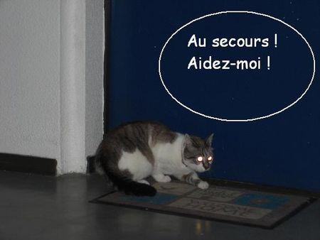 Alis_e_en_d_tresse