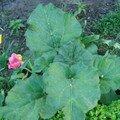 Crumble vert, rhubarbe, mélisse et l'incontournable pistache