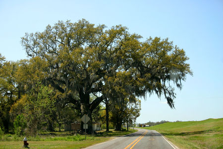 Louisiana_Oak_Alley_25