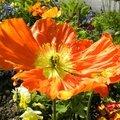fleurs-ville (1)