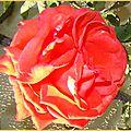 rosemaison