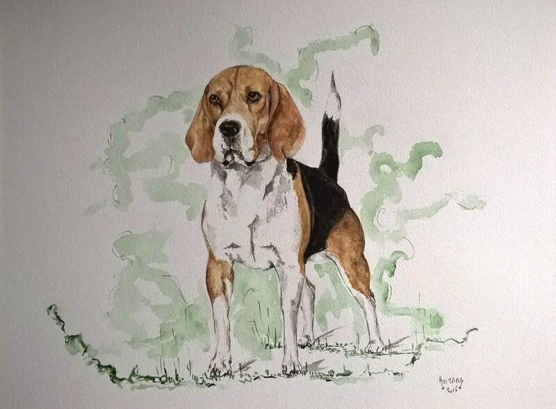aquarelle beagle Cathy Le bail