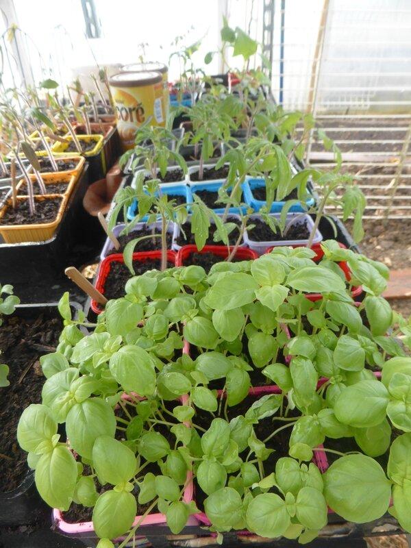 23-plants serre (3)