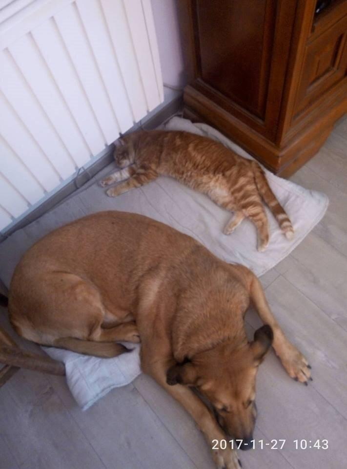 Bilbo et le chat