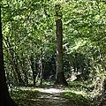 Le sentier de découverte de la forêt de sivens(tarn): 2.5km