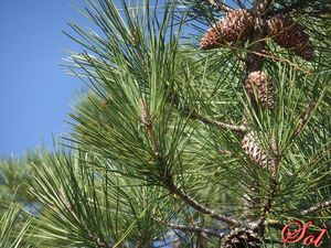 arbre_06