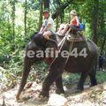phang nga_sealand park_trekking éléphant_05