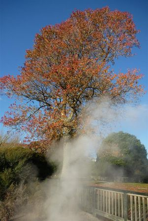 ok_red_tree_smoke__Large_