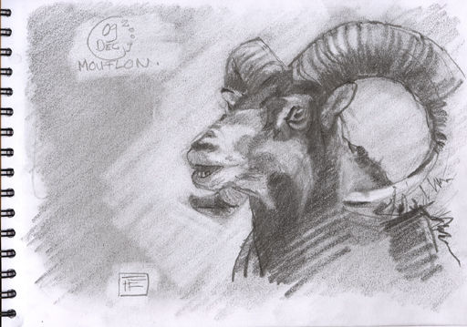 144 - Monflon 03