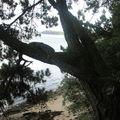 le bain de l'arbre