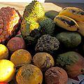 7 fruits éxotiques