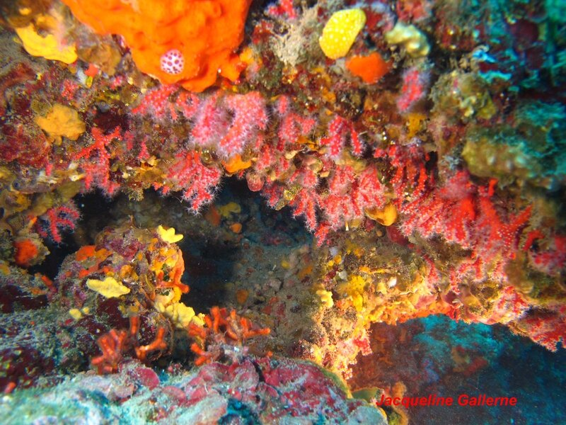 corail__2__copie