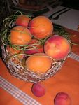 table abricots 008