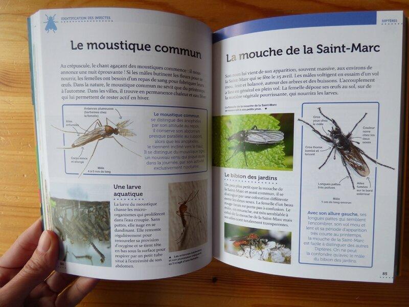 Le petit guide entomo (2)
