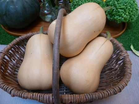courges butternut (5)