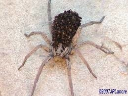 """Résultat de recherche d'images pour """"image de bebe araigne"""""""