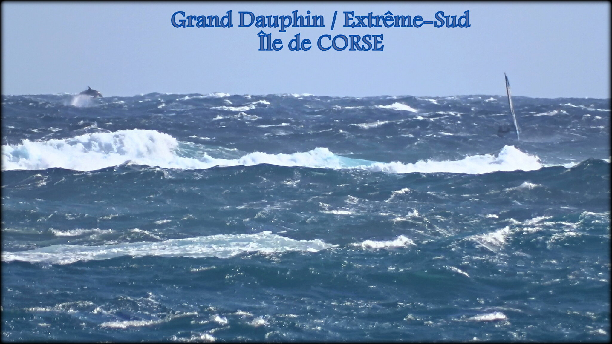 APPARITION_GROS_DAUPHINS_X_4__1__001