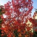 automne001