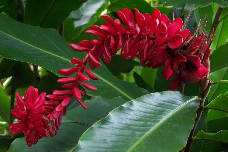 C Est Des Carambolles Et Cette Fleur Rouge Magnifique Photo