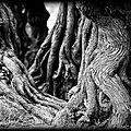 L'appel des forêts