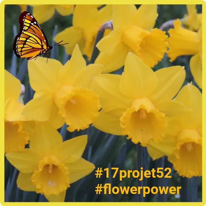 11 projet52 2017 - Flower power