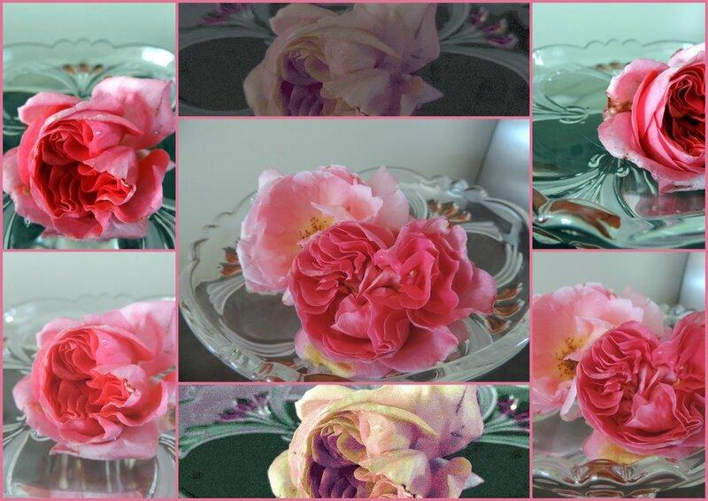 Roses (Copier)