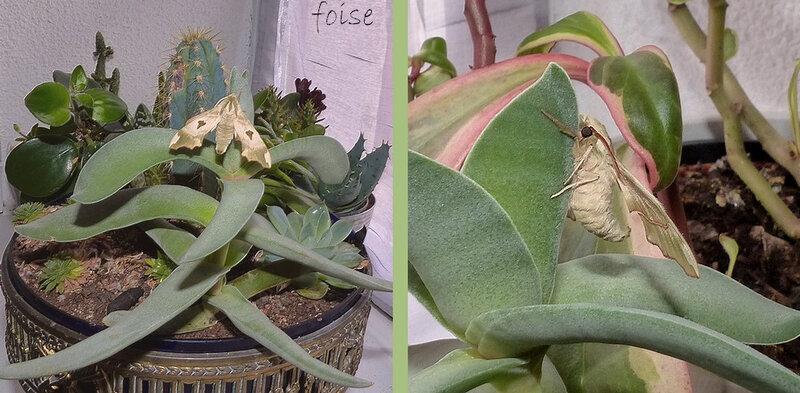 émergence dans les cactus