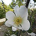 fleurs-en-ville (3)