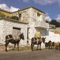 Un âne à Chypre - 2