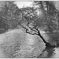 Paysage fluvial avec arbre.
