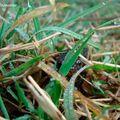 Triton jouant à cache cache dans l'herbe