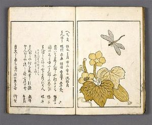 libellule_album_botanique_asie_musee_guimet_yama_no_seki_nymphea_japon